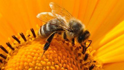 Bienen, Honig, Hof Kerkmann